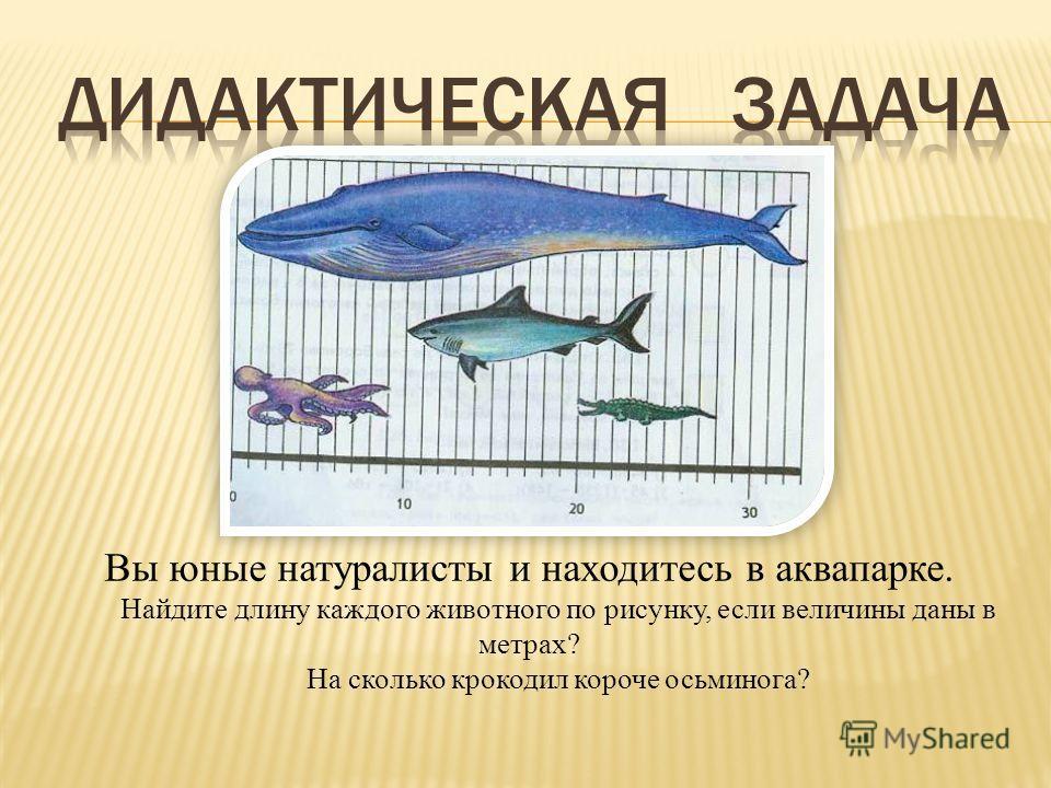 Вы юные натуралисты и находитесь в аквапарке. Найдите длину каждого животного по рисунку, если величины даны в метрах? На сколько крокодил короче осьминога?