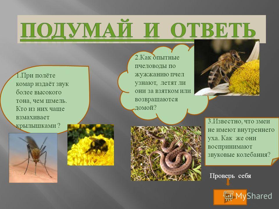 1.При полёте комар издаёт звук более высокого тона, чем шмель. Кто из них чаще взмахивает крылышками ? 3.Известно, что змеи не имеют внутреннего уха. Как же они воспринимают звуковые колебания? 2.Как опытные пчеловоды по жужжанию пчел узнают, летят л