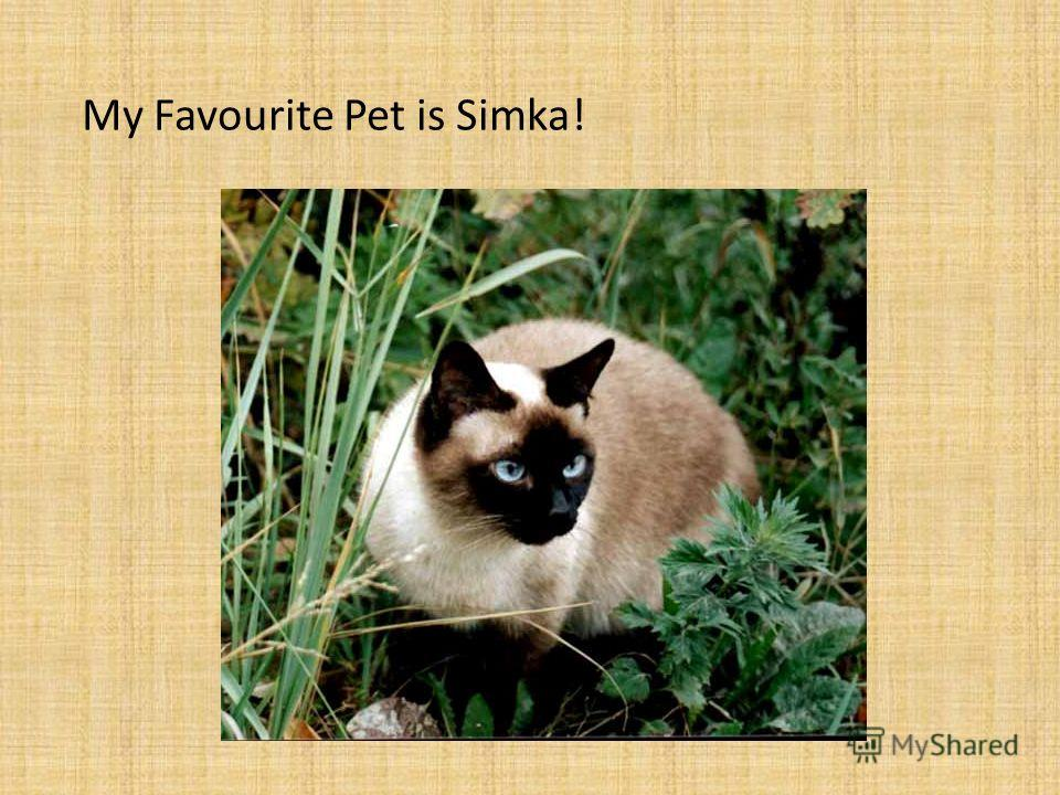 My Favourite Pet is Simka!