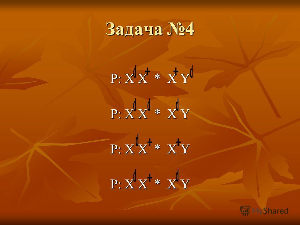 Задача 4 P: X X * X Y