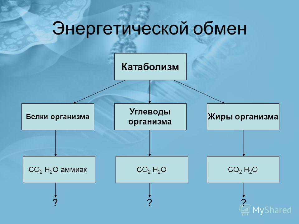 Энергетической обмен Катаболизм CO 2 H 2 O CO 2 H 2 O аммиак Углеводы организма Жиры организма Белки организма ???