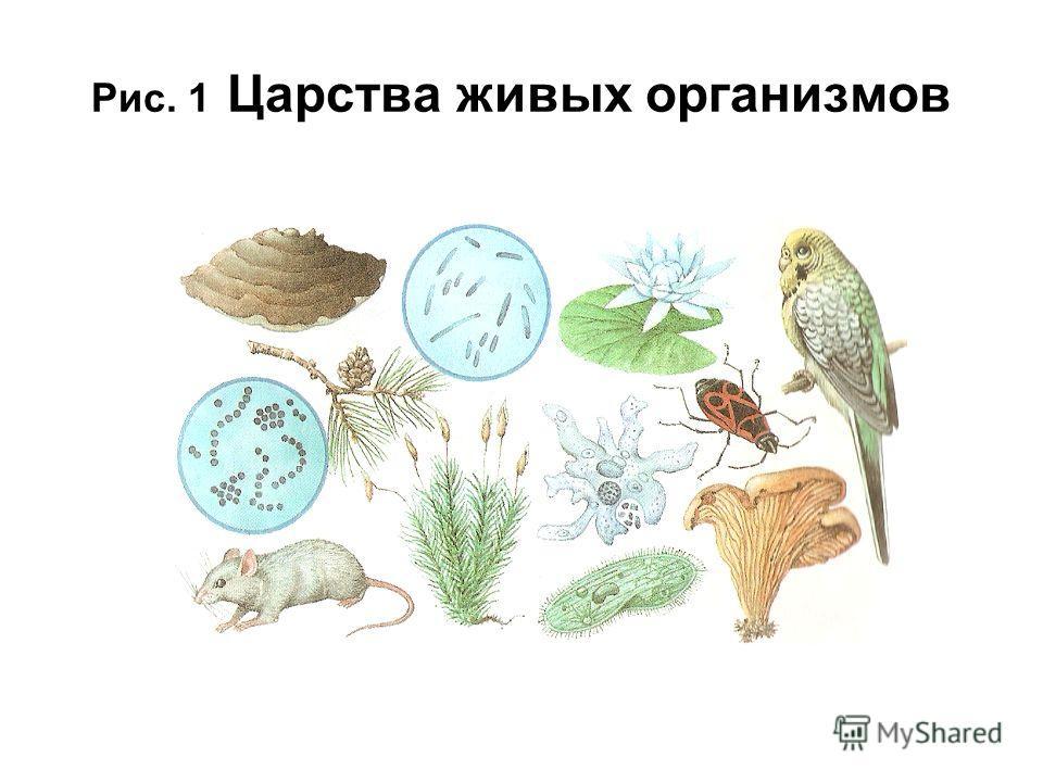 Рис. 1 Царства живых организмов