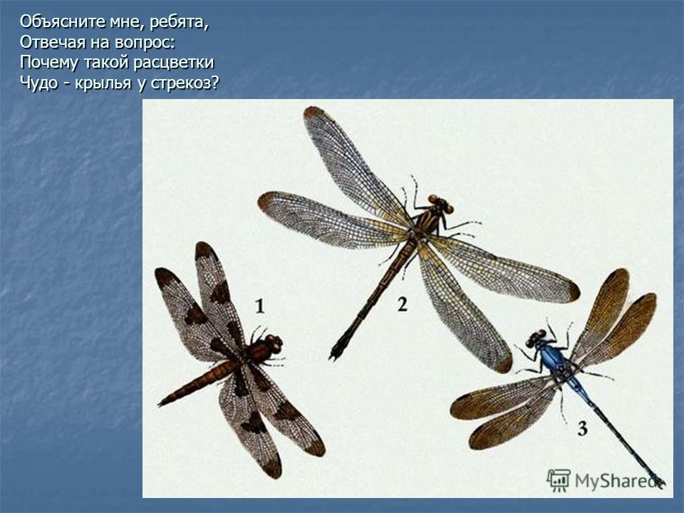 Объясните мне, ребята, Отвечая на вопрос: Почему такой расцветки Чудо - крылья у стрекоз?