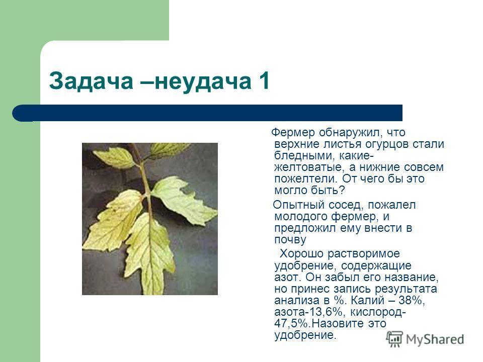 Задача –неудача 1 Фермер обнаружил, что верхние листья огурцов стали бледными, какие- желтоватые, а нижние совсем пожелтели. От чего бы это могло быть? Опытный сосед, пожалел молодого фермер, и предложил ему внести в почву Хорошо растворимое удобрени