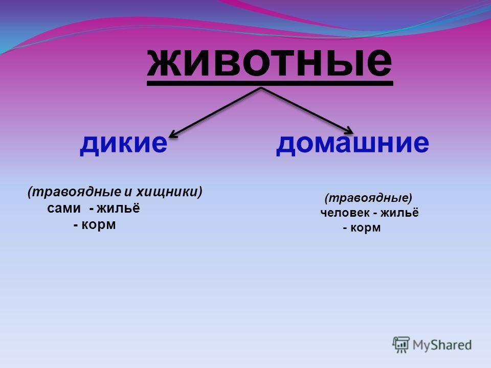 животные дикие домашние (травоядные и хищники) сами - жильё - корм (травоядные) человек - жильё - корм