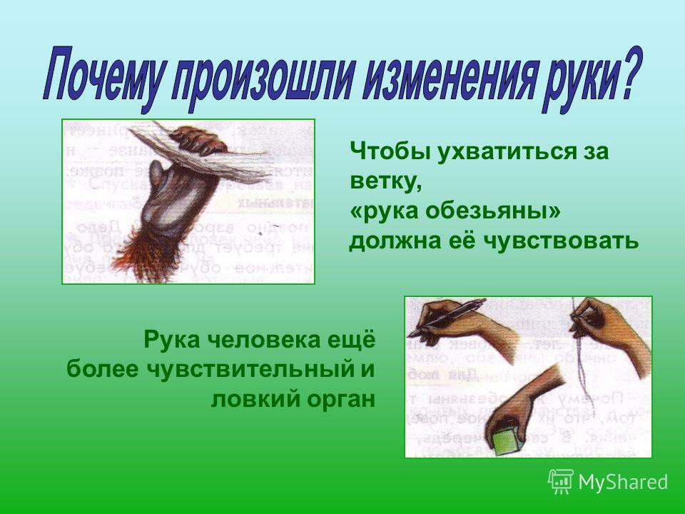 Чтобы ухватиться за ветку, «рука обезьяны» должна её чувствовать Рука человека ещё более чувствительный и ловкий орган