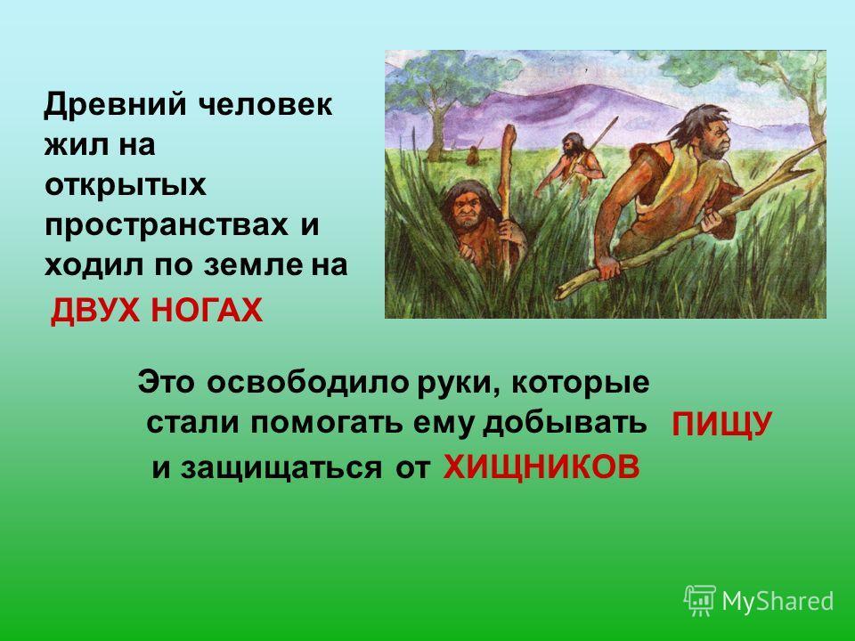 Древний человек жил на открытых пространствах и ходил по земле на ДВУХ НОГАХ Это освободило руки, которые стали помогать ему добывать ПИЩУ и защищаться отХИЩНИКОВ