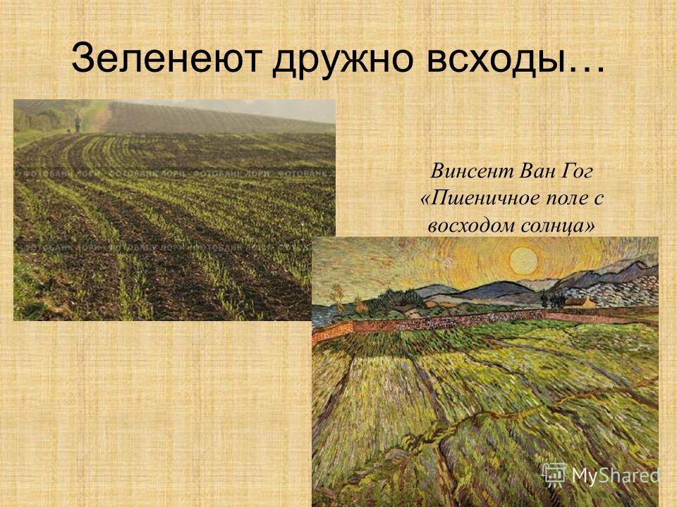 Зеленеют дружно всходы… Винсент Ван Гог «Пшеничное поле с восходом солнца»
