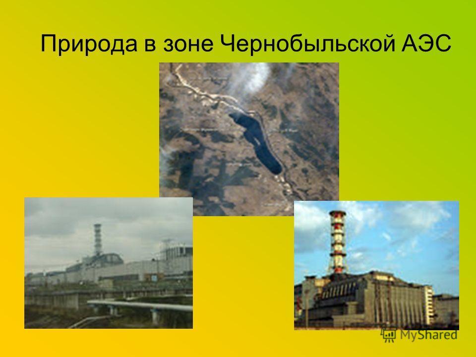 Природа в зоне Чернобыльской АЭС