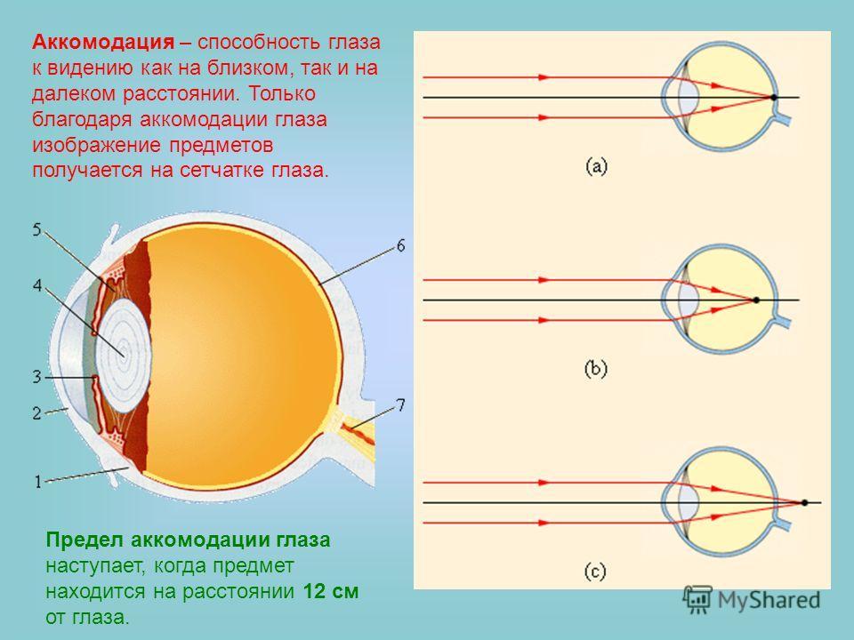 Аккомодация – способность глаза к видению как на близком, так и на далеком расстоянии. Только благодаря аккомодации глаза изображение предметов получается на сетчатке глаза. Предел аккомодации глаза наступает, когда предмет находится на расстоянии 12