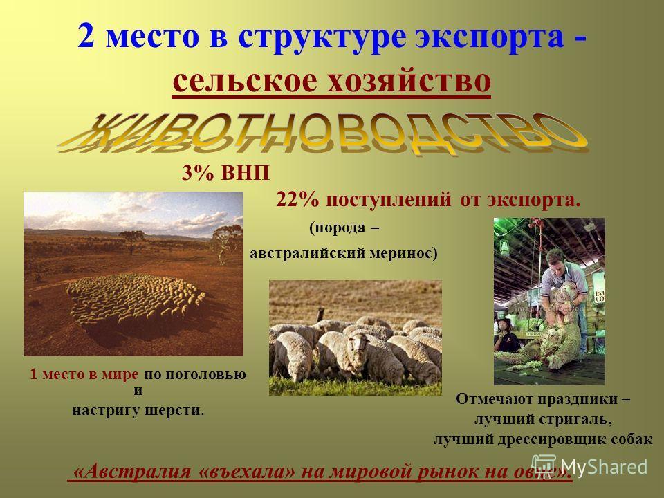 2 место в структуре экспорта - сельское хозяйство 3% ВНП 22% поступлений от экспорта. «Австралия «въехала» на мировой рынок на овце». 1 место в мире по поголовью и настригу шерсти. (порода – австралийский меринос) Отмечают праздники – лучший стригаль