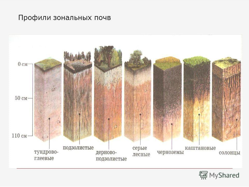 Профили зональных почв