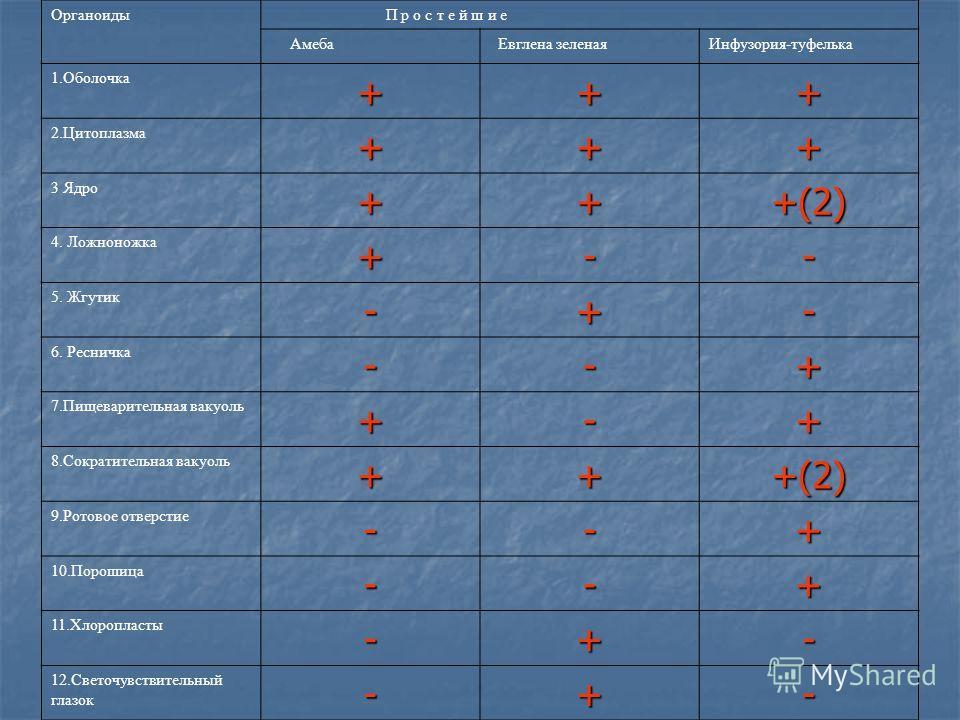 « Сходство и различие простейших» Органоиды П р о с т е й ш и е Амеба Евглена зеленаяИнфузория-туфелька 1.Оболочка+++ 2.Цитоплазма+++ 3 Ядро+++(2) 4. Ложноножка+-- 5. Жгутик-+- 6. Ресничка--+ 7.Пищеварительная вакуоль+-+ 8.Сократительная вакуоль+++(2