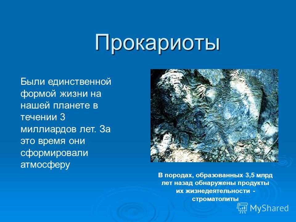 Прокариоты Были единственной формой жизни на нашей планете в течении 3 миллиардов лет. За это время они сформировали атмосферу В породах, образованных 3,5 млрд лет назад обнаружены продукты их жизнедеятельности - строматолиты
