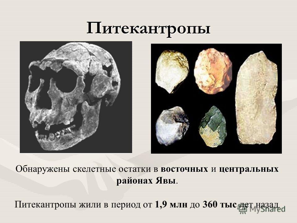 Питекантропы восточных и центральных районах Явы. Обнаружены скелетные остатки в восточных и центральных районах Явы. Питекантропы жили в период от 1,9 млн до 360 тыс лет назад.