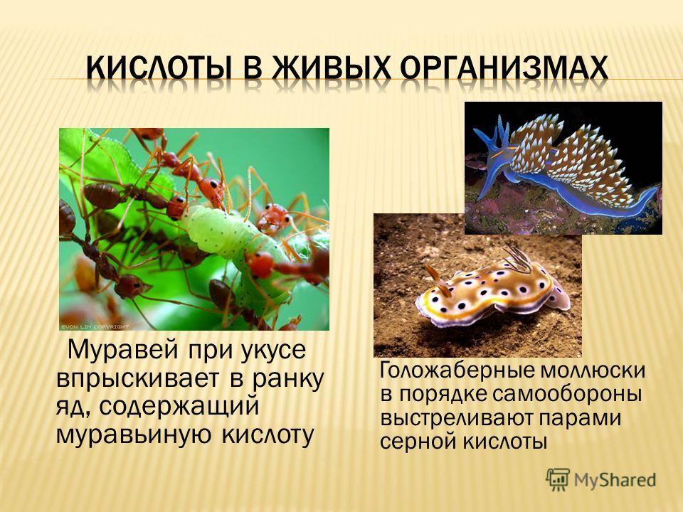 Муравей при укусе впрыскивает в ранку яд, содержащий муравьиную кислоту Голожаберные моллюски в порядке самообороны выстреливают парами серной кислоты