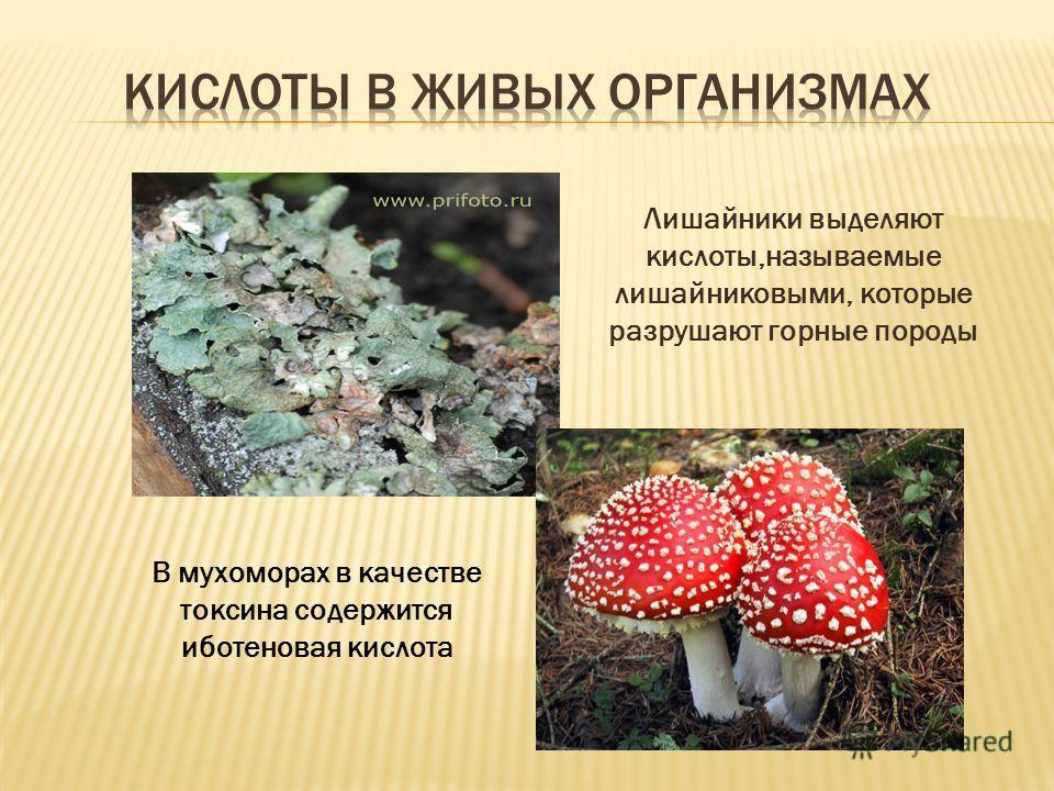 Лишайники выделяют кислоты,называемые лишайниковыми, которые разрушают горные породы В мухоморах в качестве токсина содержится иботеновая кислота
