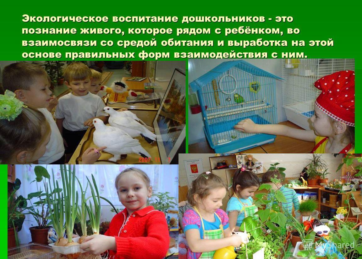 Экологическое воспитание дошкольников - это познание живого, которое рядом с ребёнком, во взаимосвязи со средой обитания и выработка на этой основе правильных форм взаимодействия с ним.