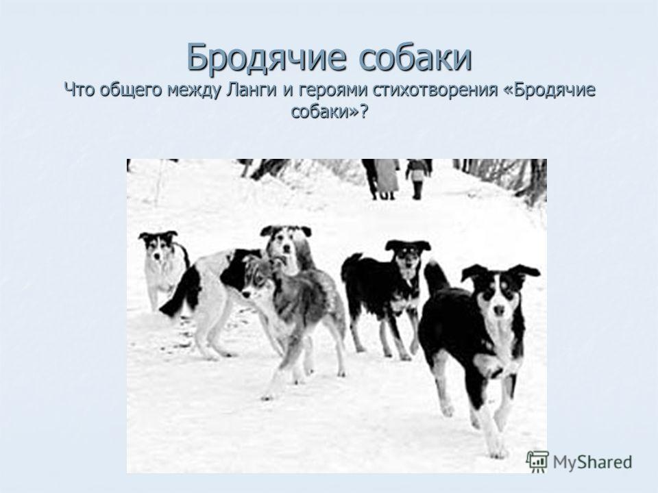 Бродячие собаки Что общего между Ланги и героями стихотворения «Бродячие собаки»?