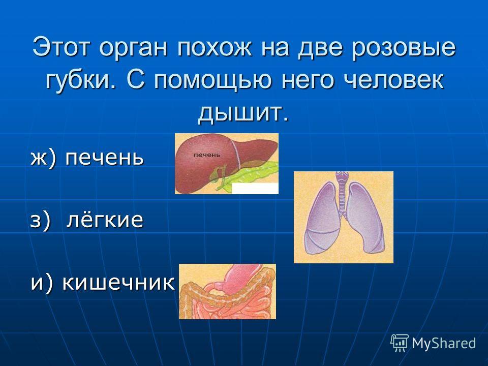 Этот орган похож на две розовые губки. С помощью него человек дышит. ж) печень з) лёгкие и) кишечник