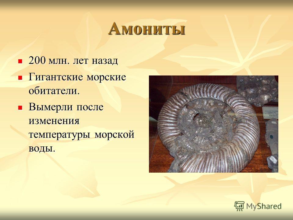 Амониты 200 млн. лет назад 200 млн. лет назад Гигантские морские обитатели. Гигантские морские обитатели. Вымерли после изменения температуры морской воды. Вымерли после изменения температуры морской воды.