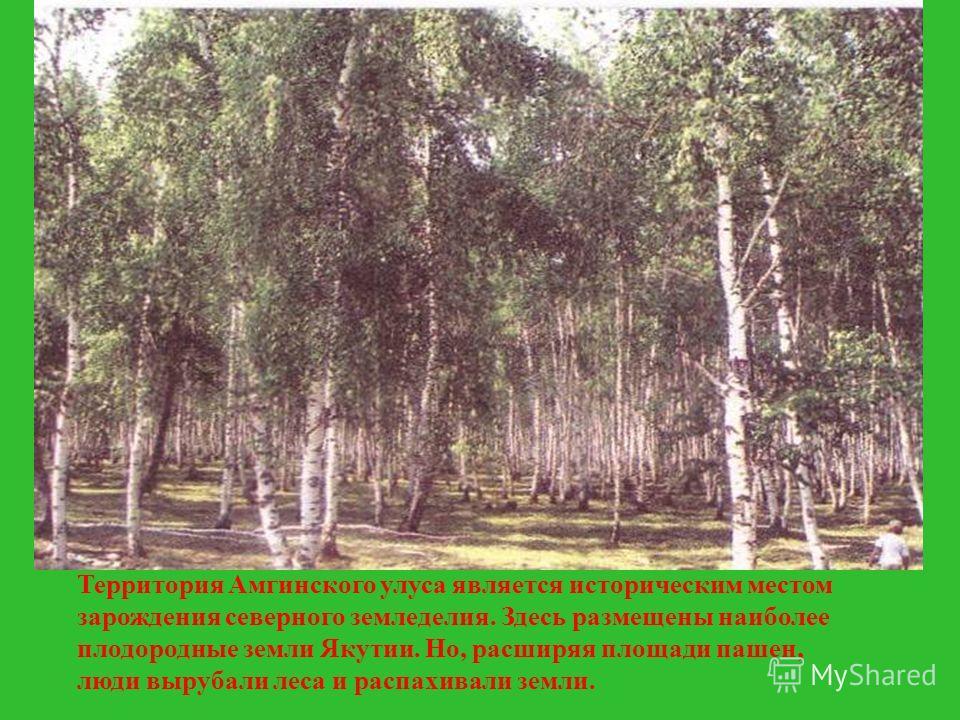 Территория Амгинского улуса является историческим местом зарождения северного земледелия. Здесь размещены наиболее плодородные земли Якутии. Но, расширяя площади пашен, люди вырубали леса и распахивали земли.