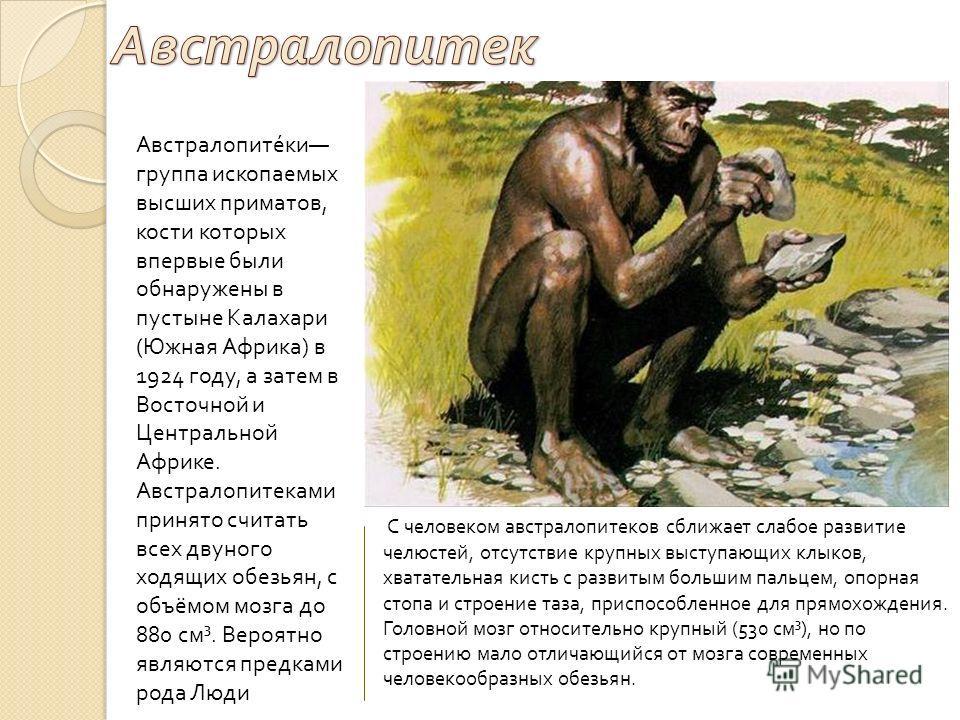 Австралопитеки группа ископаемых высших приматов, кости которых впервые были обнаружены в пустыне Калахари ( Южная Африка ) в 1924 году, а затем в Восточной и Центральной Африке. Австралопитеками принято считать всех двуного ходящих обезьян, с объёмо