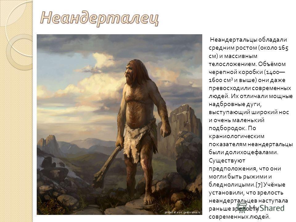 Неандертальцы обладали средним ростом ( около 165 см ) и массивным телосложением. Объёмом черепной коробки (1400 1600 см ³ и выше ) они даже превосходили современных людей. Их отличали мощные надбровные дуги, выступающий широкий нос и очень маленький