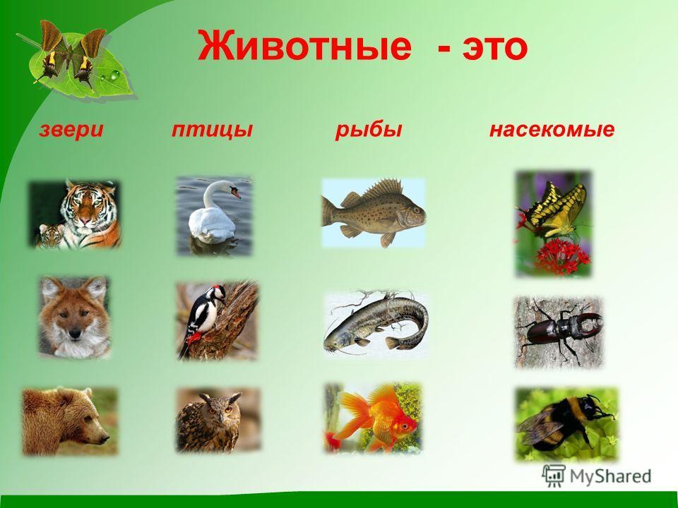 Животные - это звериптицырыбынасекомые