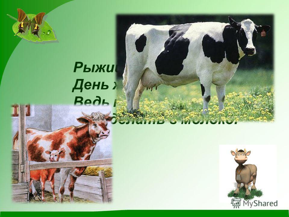 Рыжий молокозавод День жуёт и ночь жуёт: Ведь траву не так легко Переделать в молоко!