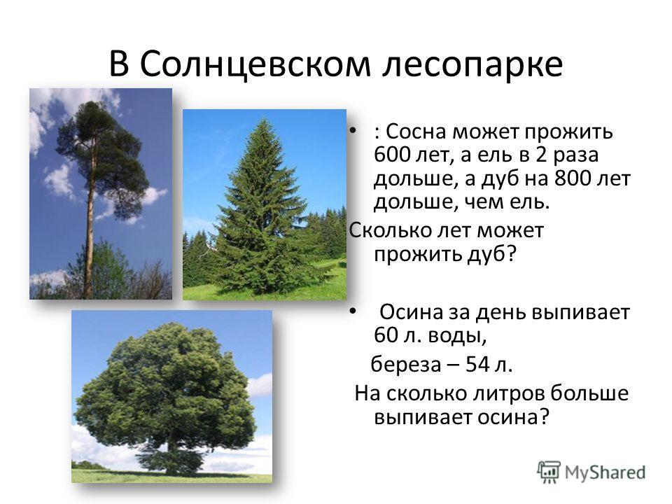 В Солнцевском лесопарке : Сосна может прожить 600 лет, а ель в 2 раза дольше, а дуб на 800 лет дольше, чем ель. Сколько лет может прожить дуб? Осина за день выпивает 60 л. воды, береза – 54 л. На сколько литров больше выпивает осина?
