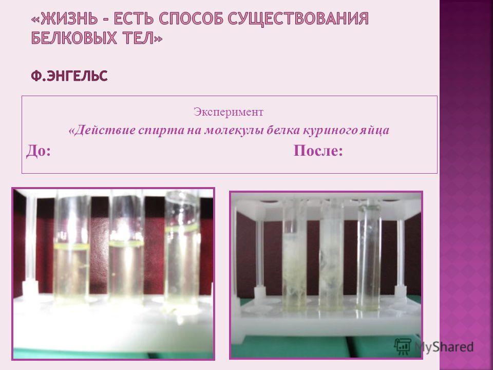 Эксперимент «Действие спирта на молекулы белка куриного яйца До: После: