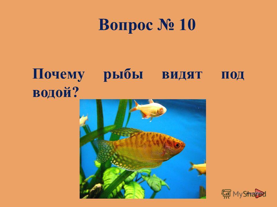 Вопрос 10 Почему рыбы видят под водой?