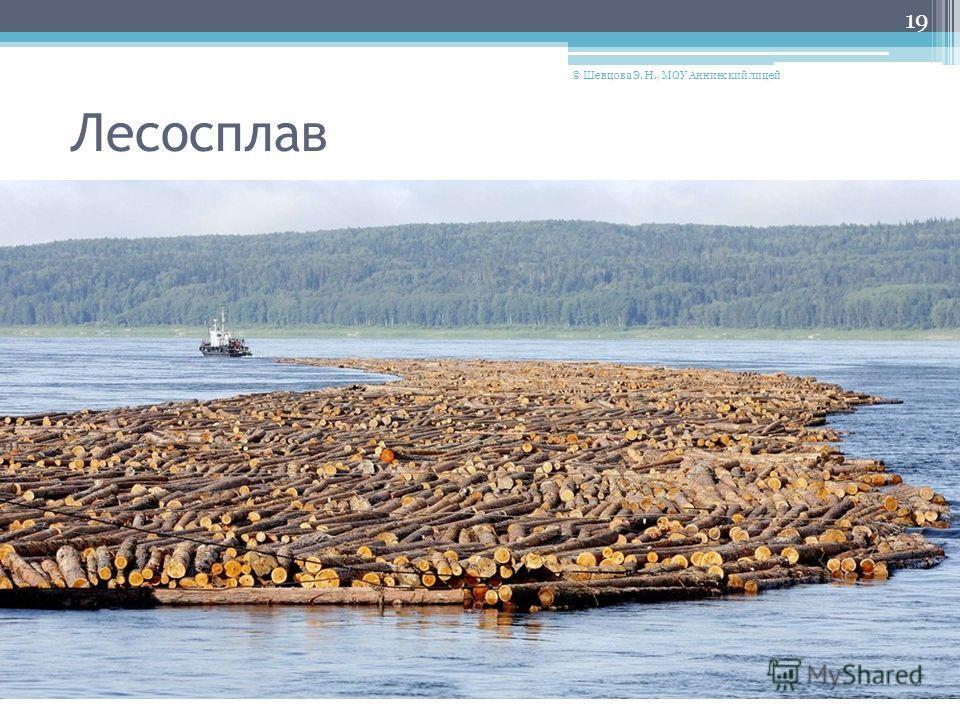 Лесосплав 19 © Шевцова Э. Н., МОУ Аннинский лицей