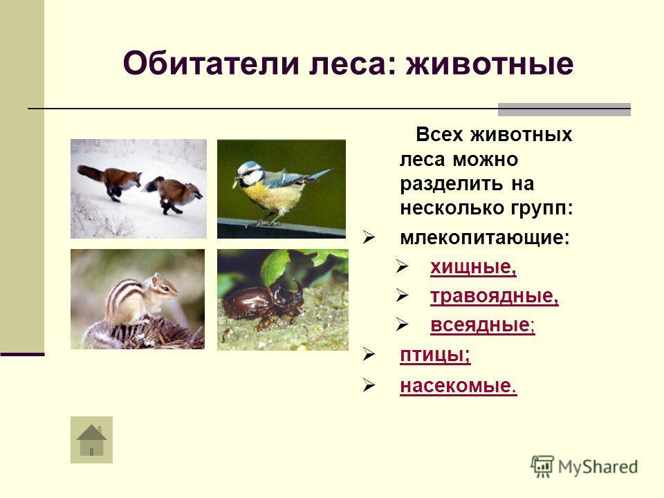Обитатели леса: животные Всех животных леса можно разделить на несколько групп: млекопитающие: хищные, травоядные, всеядные; всеядные; птицы; насекомые. насекомые.