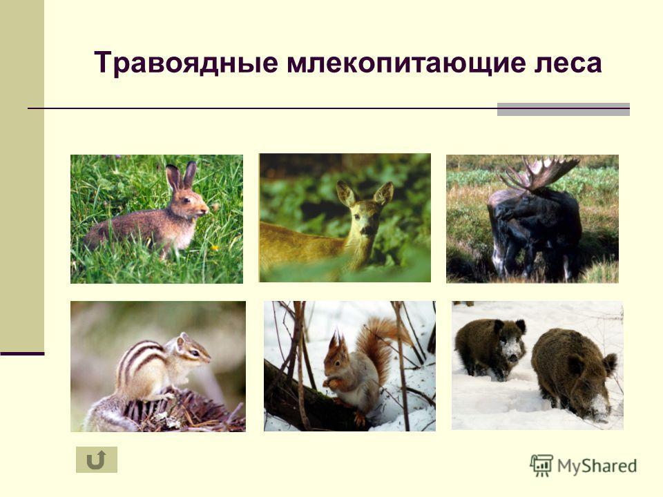 Травоядные млекопитающие леса
