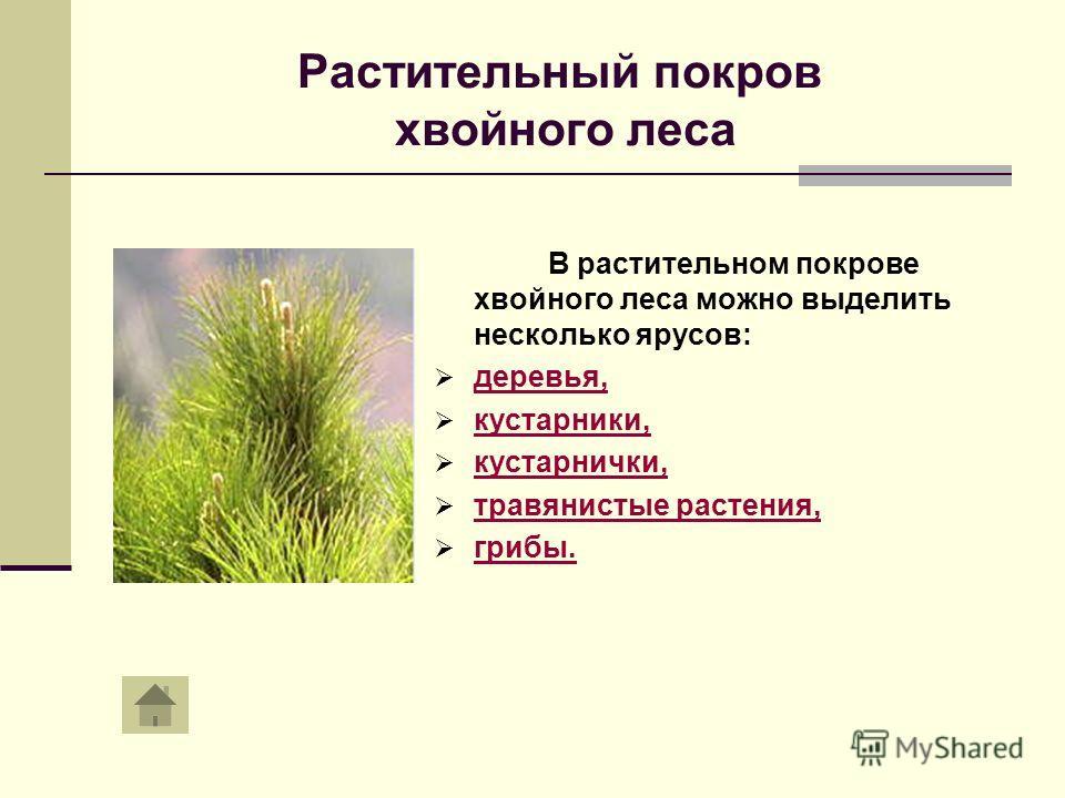 Растительный покров хвойного леса В растительном покрове хвойного леса можно выделить несколько ярусов: деревья, кустарники, кустарнички, травянистые растения, грибы.