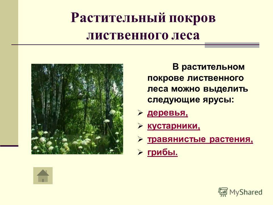 Растительный покров лиственного леса В растительном покрове лиственного леса можно выделить следующие ярусы: деревья, кустарники, травянистые растения, грибы.