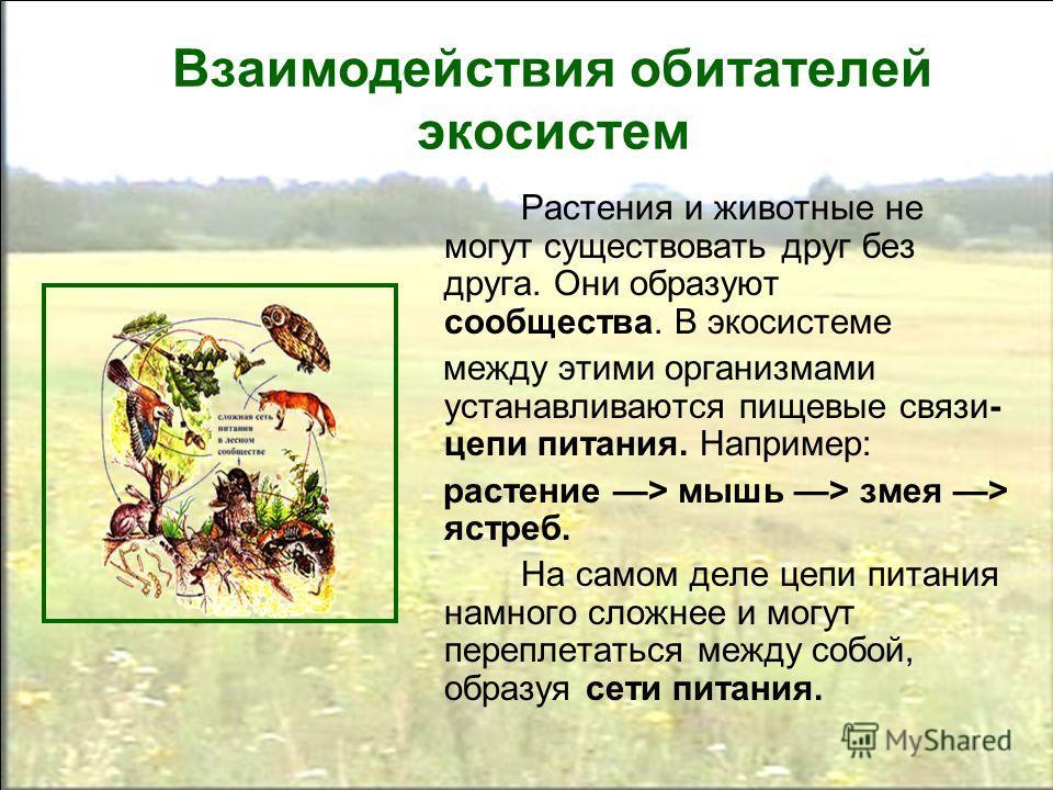 Взаимодействия обитателей экосистем Растения и животные не могут существовать друг без друга. Они образуют сообщества. В экосистеме между этими организмами устанавливаются пищевые связи- цепи питания. Например: растение > мышь > змея > ястреб. На сам