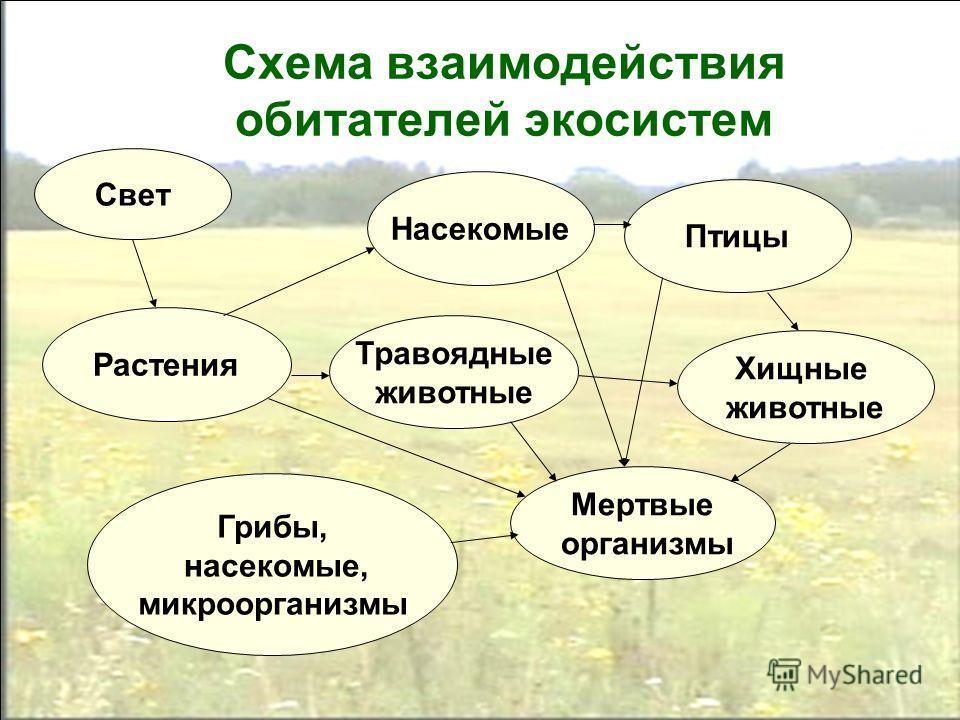 Схема взаимодействия обитателей экосистем Свет Травоядные животные Хищные животные Мертвые организмы Грибы, насекомые, микроорганизмы Растения Насекомые Птицы