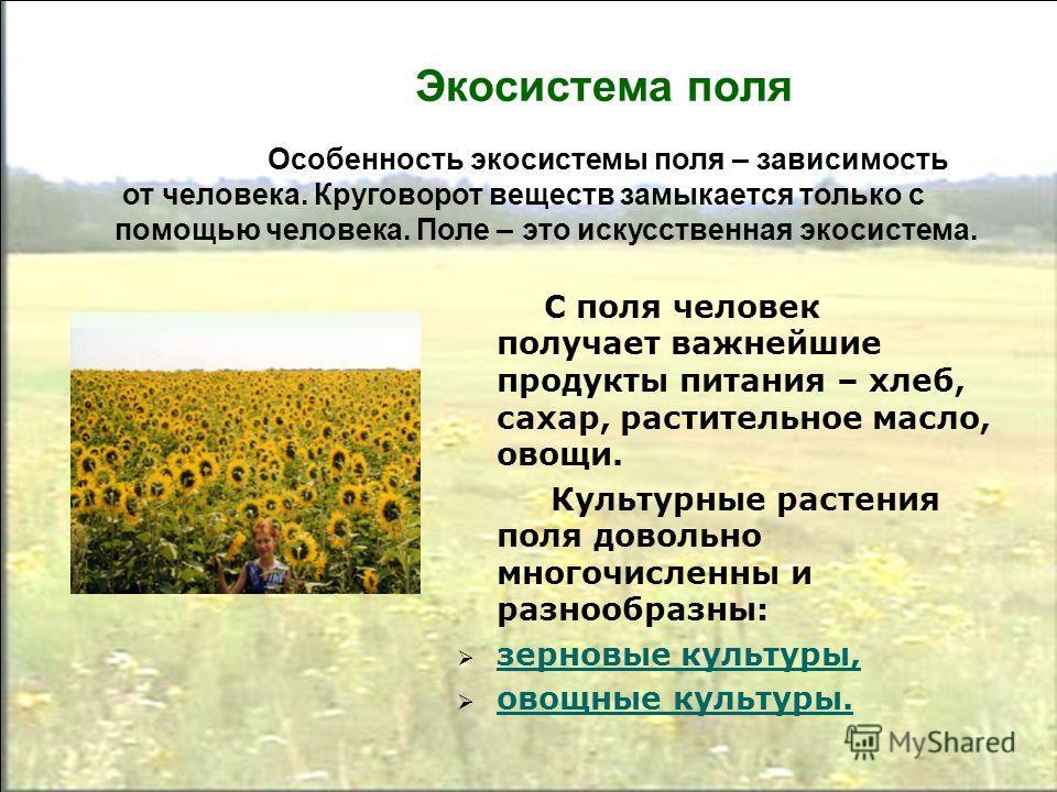 Экосистема поля С поля человек получает важнейшие продукты питания – хлеб, сахар, растительное масло, овощи. Культурные растения поля довольно многочисленны и разнообразны: зерновые культуры, овощные культуры. Особенность экосистемы поля – зависимост