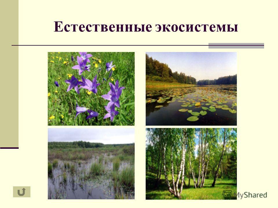 Естественные экосистемы