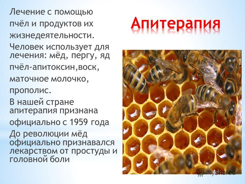 Лечение с помощью пчёл и продуктов их жизнедеятельности. Человек использует для лечения: мёд, пергу, яд пчёл-апитоксин,воск, маточное молочко, прополис. В нашей стране апитерапия признана официально с 1959 года До революции мёд официально признавался