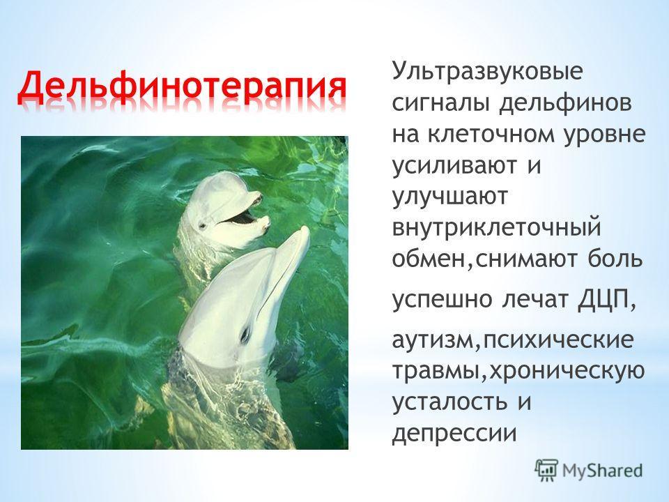 Ультразвуковые сигналы дельфинов на клеточном уровне усиливают и улучшают внутриклеточный обмен,снимают боль успешно лечат ДЦП, аутизм,психические травмы,хроническую усталость и депрессии