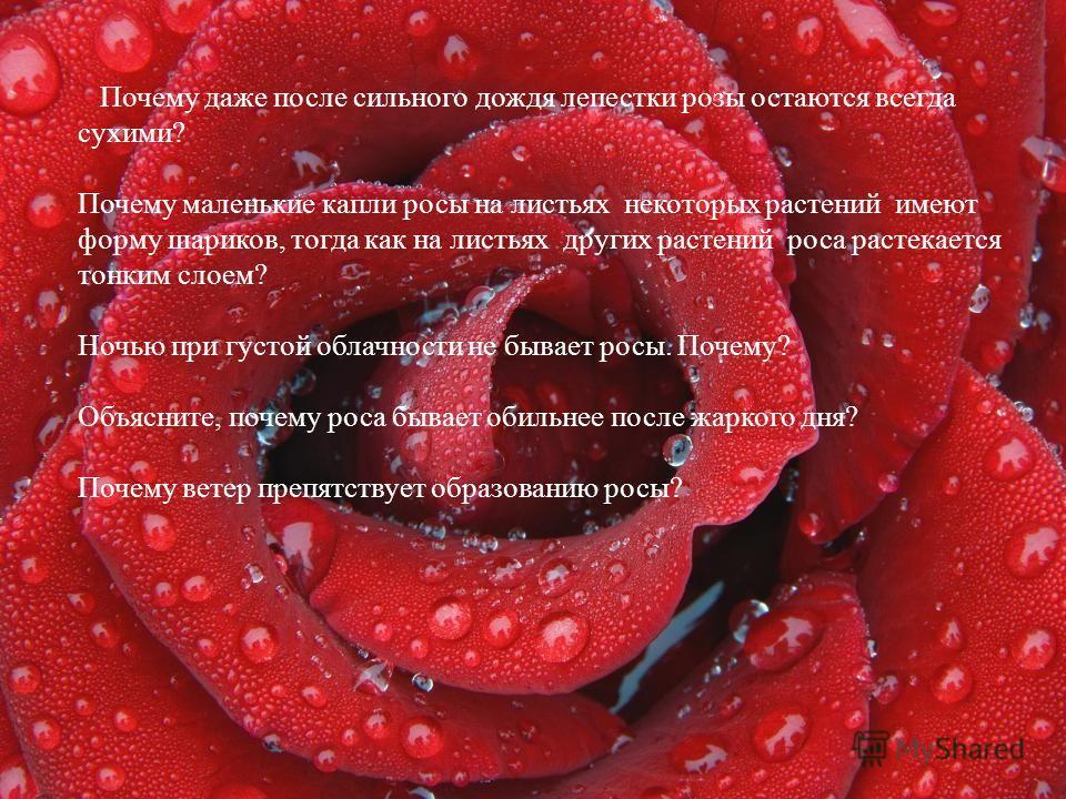 Вопросы Почему даже после сильного дождя лепестки розы остаются всегда сухими? Почему маленькие капли росы на листьях некоторых растений имеют форму шариков, тогда как на листьях других растений роса растекается тонким слоем? Ночью при густой облачно