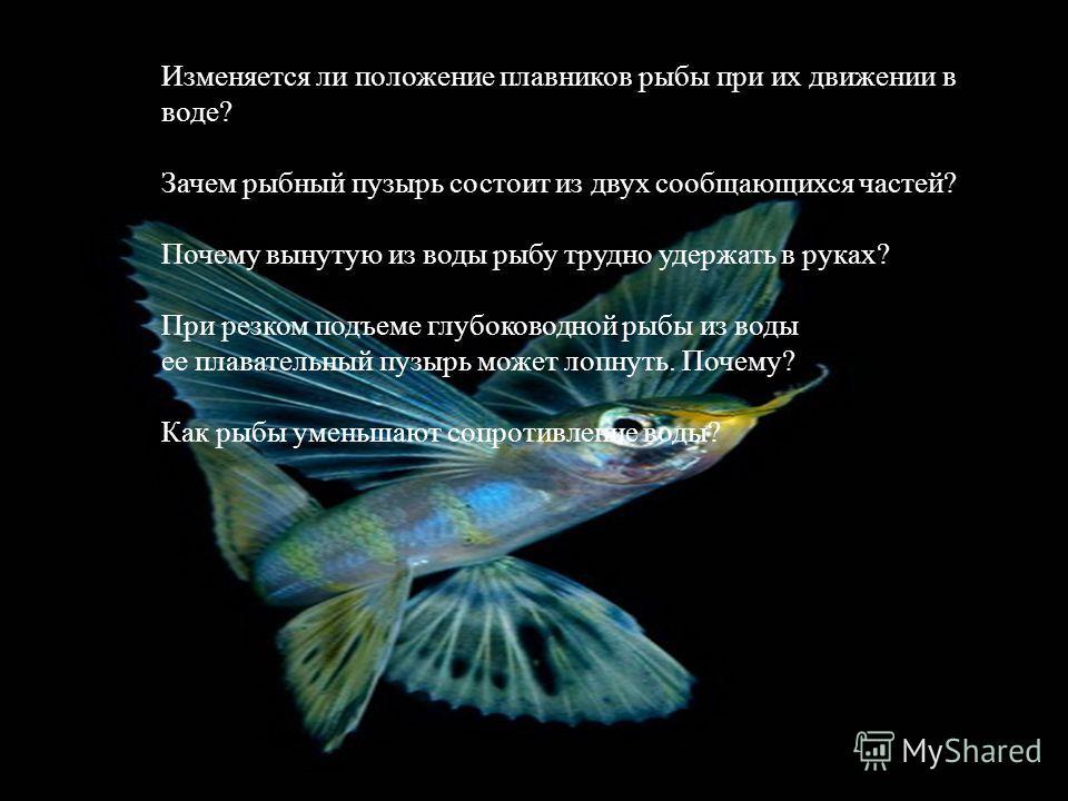 Изменяется ли положение плавников рыбы при их движении в воде? Зачем рыбный пузырь состоит из двух сообщающихся частей? Почему вынутую из воды рыбу трудно удержать в руках? При резком подъеме глубоководной рыбы из воды ее плавательный пузырь может ло