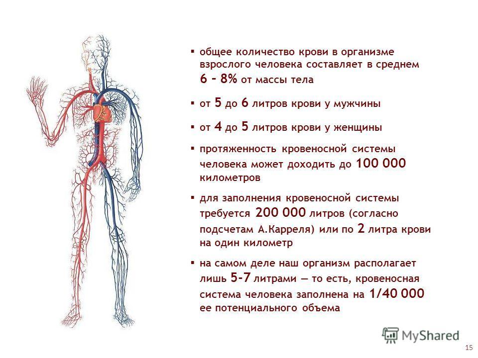 общее количество крови в организме взрослого человека составляет в среднем 6 – 8% от массы тела от 5 до 6 литров крови у мужчины от 4 до 5 литров крови у женщины протяженность кровеносной системы человека может доходить до 100 000 километров для запо