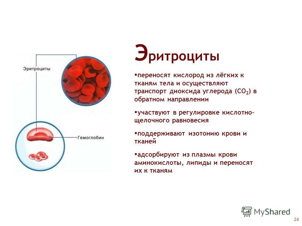Э ритроциты переносят кислород из лёгких к тканям тела и осуществляют транспорт диоксида углерода (CO 2 ) в обратном направлении участвуют в регулировке кислотно- щелочного равновесия поддерживают изотонию крови и тканей адсорбируют из плазмы крови а