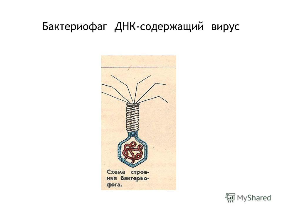 Бактериофаг ДНК-содержащий вирус