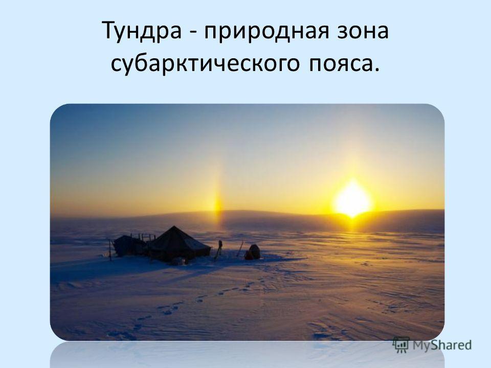 Тундра - природная зона субарктического пояса.